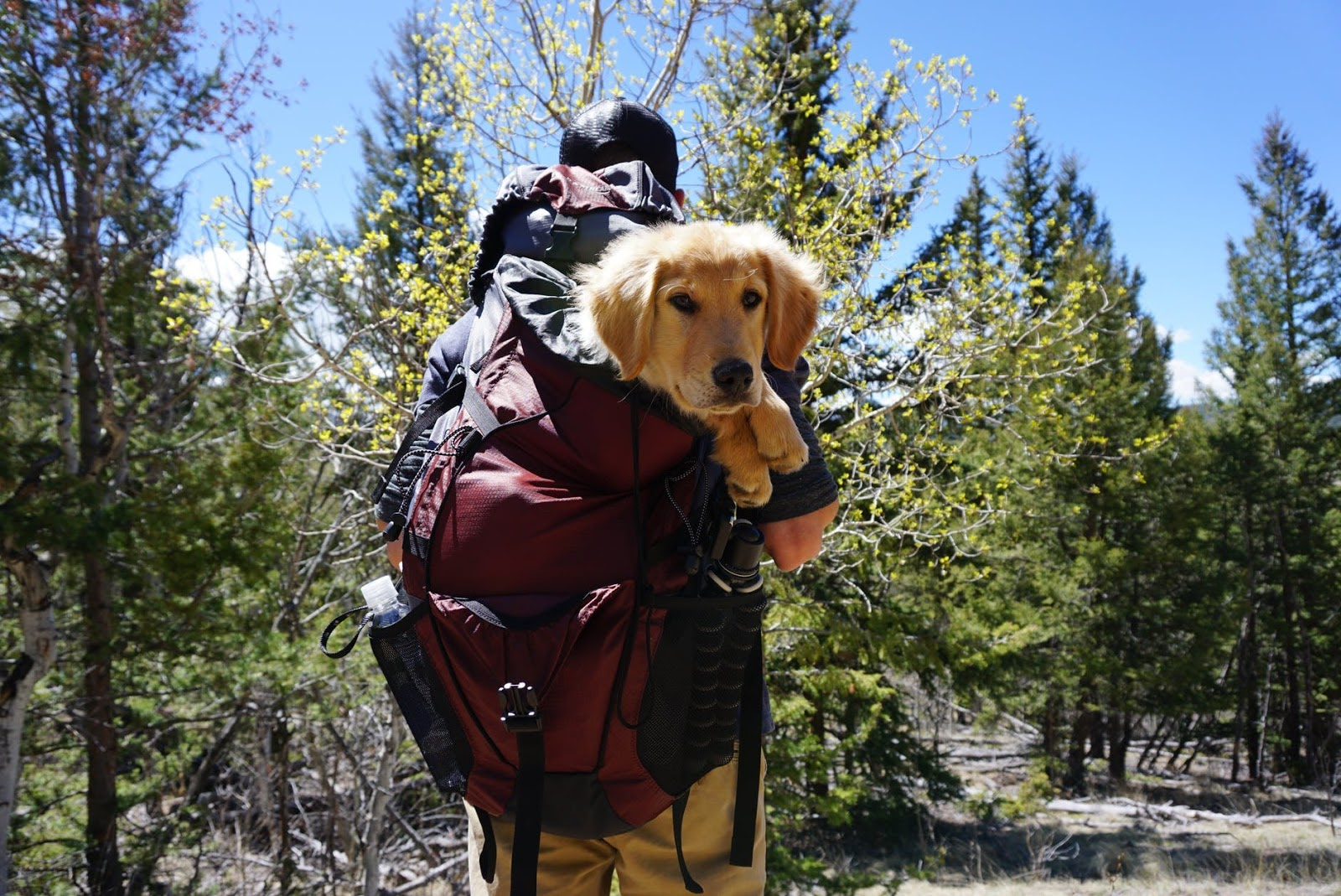 Pet-Friendly Travel Destinations To Take Note Of